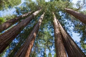 木の陽、木‗shutterstock_132827696